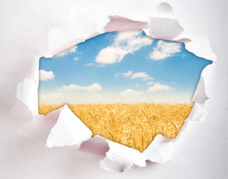 Wheat field through hole in paper photo