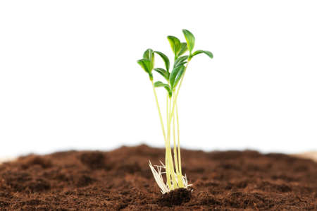 Green seedling illustrating concept of new life Stock Photo - 9007324
