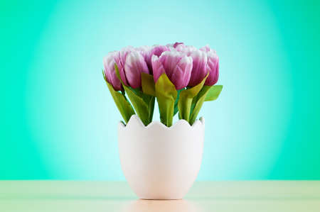 flower bulb: Colorful tulip flowers in the white pot Stock Photo