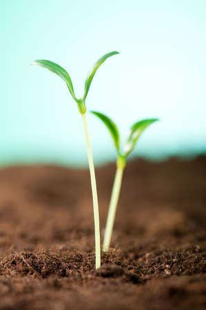 Green seedling illustrating concept of new life Stock Photo - 9087828