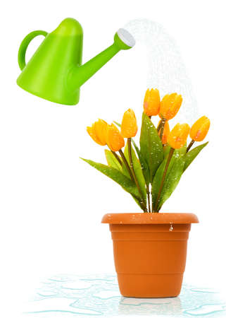 Watering can and pot of tulips Stock Photo