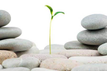 Pebbles and seedlings - alternative medicine concept photo