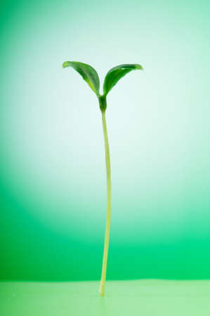 Green seedling illustrating concept of new life Stock Photo - 9487668