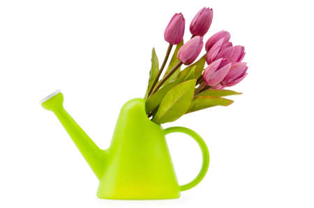 Gardening concept - Tulips and watering can photo