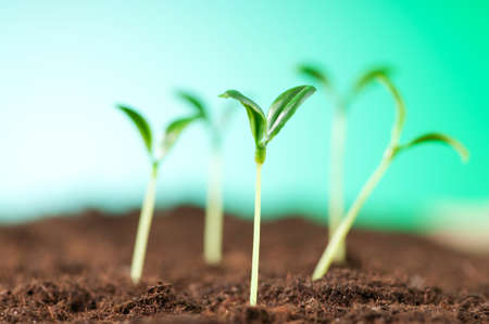 Green seedling illustrating concept of new life Stock Photo - 9542166