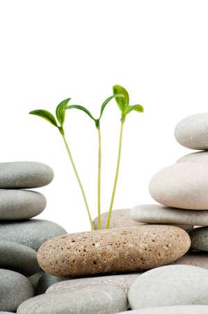 Pebbles and seedlings - alternative medicine concept Stock Photo - 9590443