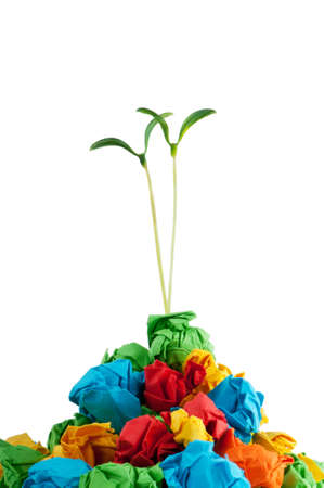 crumpled: Paper recycling concept with seedlings on white