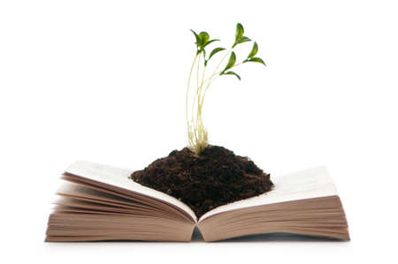 Knowledge concept with books and seedlings Stock Photo - 9847339
