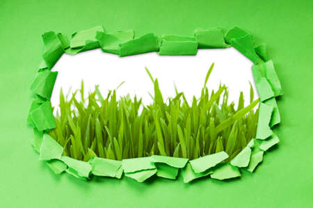 Torn paper with grass  photo
