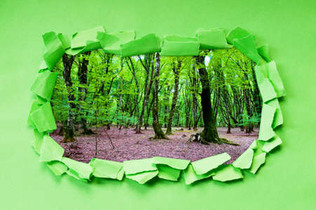 Torn paper with trees through the hole Stock Photo - 9917422
