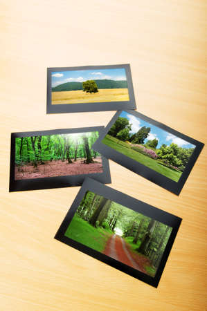 Forest on the picture frames Stock Photo - 9917435