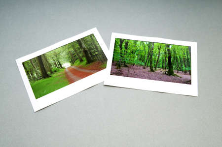 Forest on the picture frames Stock Photo - 9917441