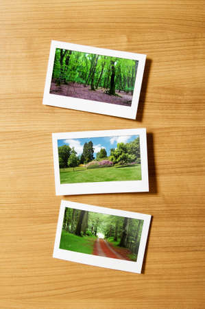 Forest on the picture frames Stock Photo - 9917421