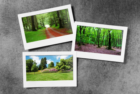 Forest on the picture frames Stock Photo - 9917418