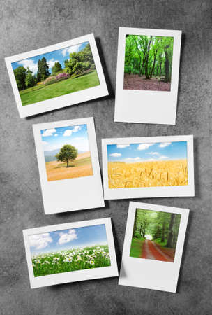 Forest on the picture frames Stock Photo - 9917445