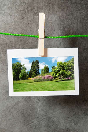 Forest on the picture frames Stock Photo - 9917442