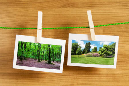 Forest on the picture frames Stock Photo - 9917420