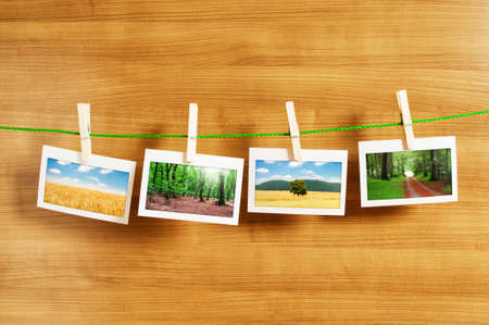 Forest on the picture frames Stock Photo - 9917417