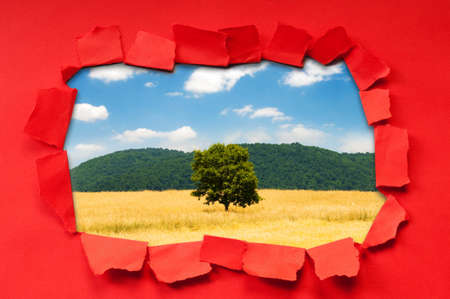 Torn paper with trees through the hole Stock Photo - 9917015