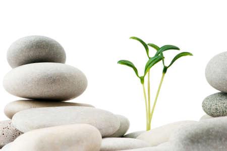 massage symbol: Pebbles and seedlings - alternative medicine concept