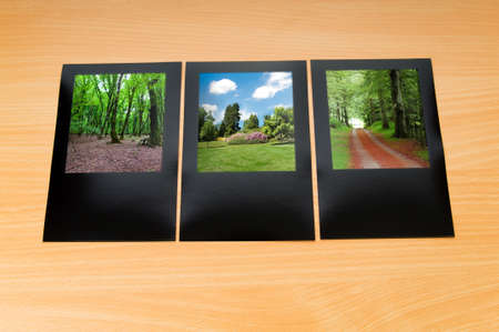 Forest on the picture frames Stock Photo - 9992576