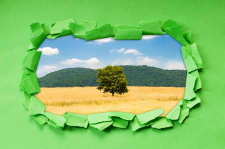 Torn paper with trees through the hole Stock Photo - 9990834