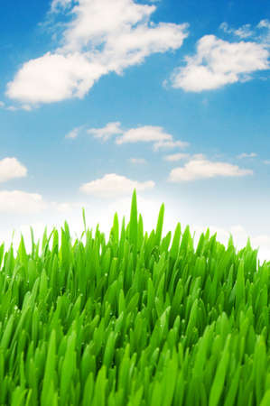 Green grass against blue sky photo