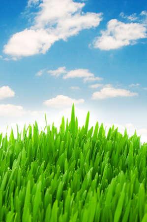 grasses: Green grass against blue sky