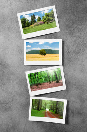 Forest on the picture frames Stock Photo - 9992699