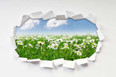 Camomiles field through hole in paper Stock Photo - 9992720