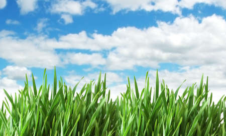 grasses: Green grass against blue sky