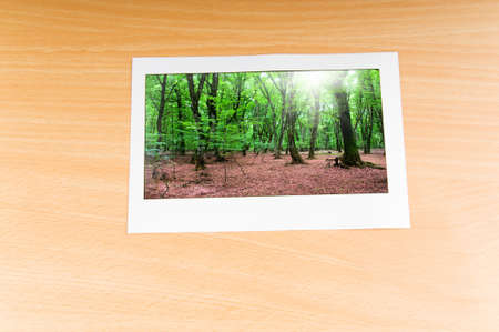 Forest on the picture frames photo