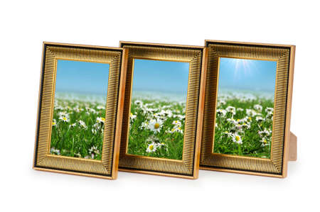 Daisy flowers in the picture frames on white photo
