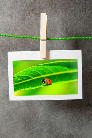 Lady bug in the picture frame photo