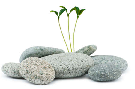 stack stones: Pebbles and seedlings - alternative medicine concept