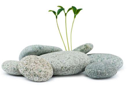 stack rock: Pebbles and seedlings - alternative medicine concept
