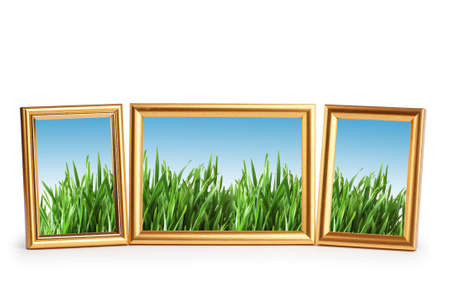 turf flowers: Green grass in the picture frames Stock Photo