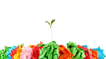 Papier-Recycling-Konzept mit Sämlingen auf weiß