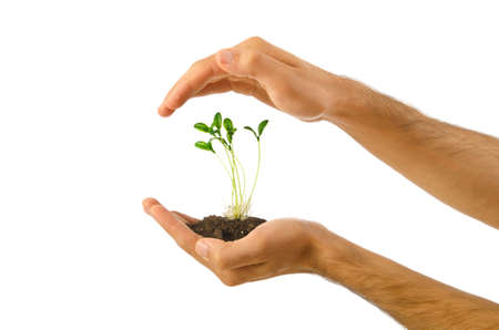 Green seedling in the hand Stock Photo - 10615367