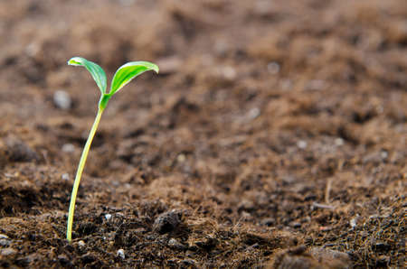 saplings: Green seedlings in new life concept Stock Photo