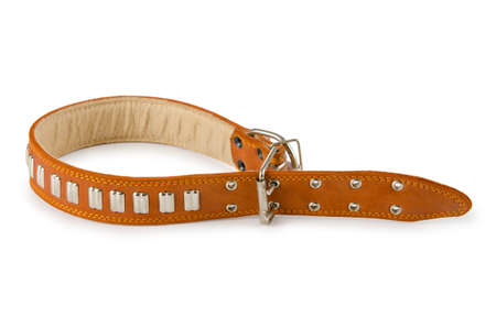 Dog collar isolated on the white background Stock Photo - 10791446