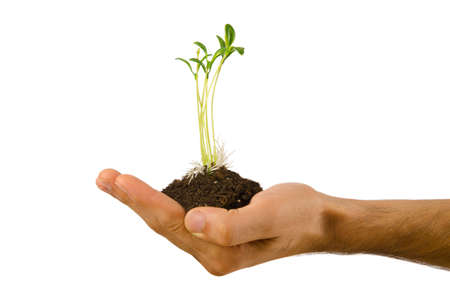 Green seedling in the hand Stock Photo - 10810798