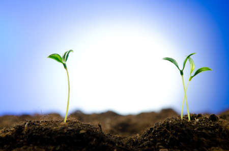 germinados: Pl�ntulas verdes en concepto de nueva vida