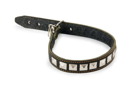 dog leash: Dog collar isolated on the white background