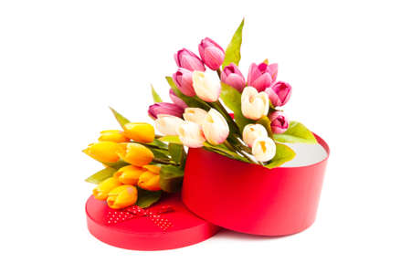 Giftbox and tulips isolated on white photo