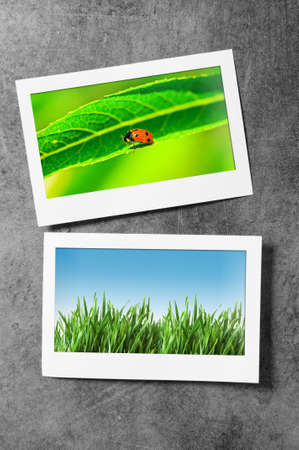 Nature photos in picture frames photo