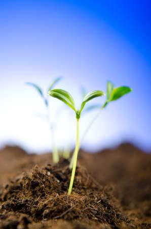 新しい生活のコンセプトに緑の苗