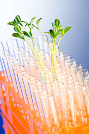 Experiment with green seedlings in the lab Stock Photo - 11075751