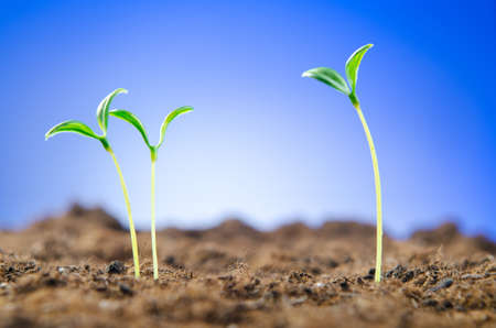 Green seedlings in new life concept Stock Photo - 11129930