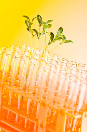 Experiment with green seedlings in the lab photo